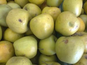 elma resimleri