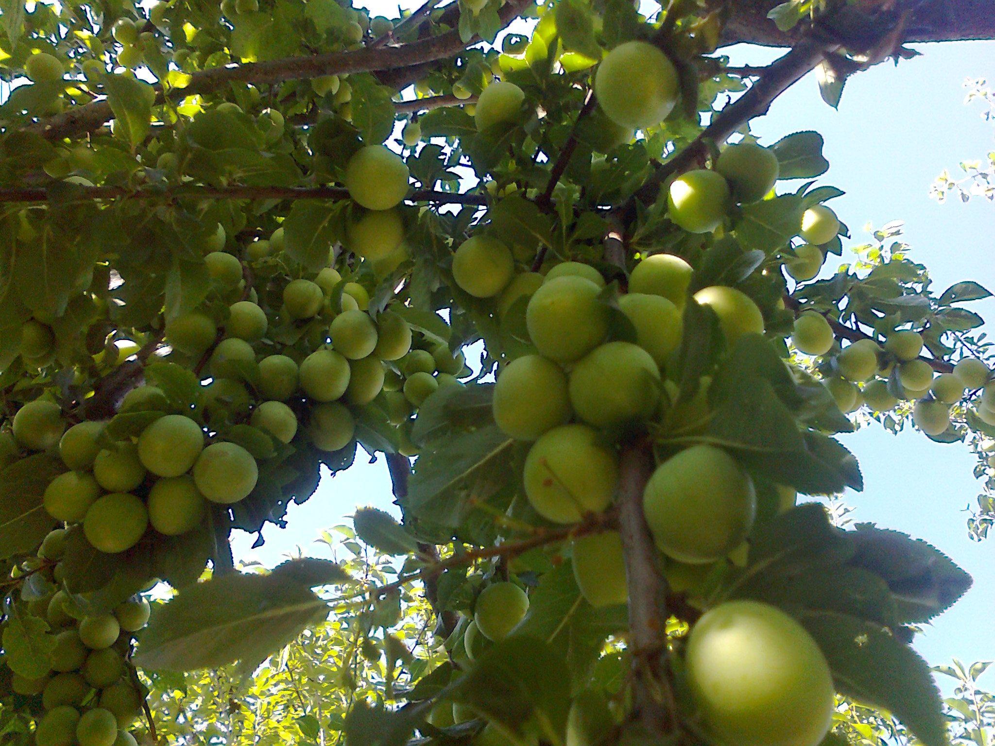 Antibiyotik ile meyve yenir mi